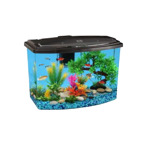 Aquarium Kits with Filtration